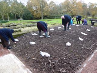 P1010039 crocus planting