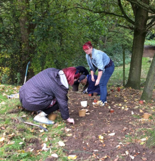 Planting Crocus corms at Norton Priory
